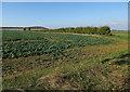 TL3040 : Field near Morden Grange Farm by Hugh Venables