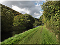 S7142 : River Barrow Towpath by kevin higgins