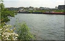 TQ1667 : Thames Marina by Derek Harper