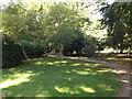 TL8161 : Geraldine's Walk Path by Adrian Cable