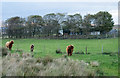 NR3758 : Highland Cattle at Kynagarry by Trevor Littlewood