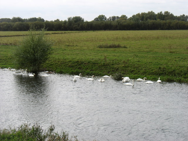 Swans on the New Bedford River