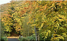 J3268 : Minnowburn beeches, Belfast - October 2016(2) by Albert Bridge