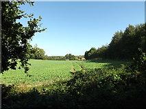 TG0822 : Farmland off Marriott's Way by Geographer