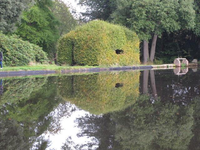 Beech tree formed into bird watching hide, Forde Abbey