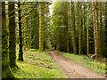 NN0910 : Woodland road by Trevor Littlewood