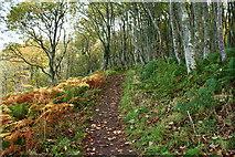 NS2209 : The Cliff Walk, Culzean by Billy McCrorie
