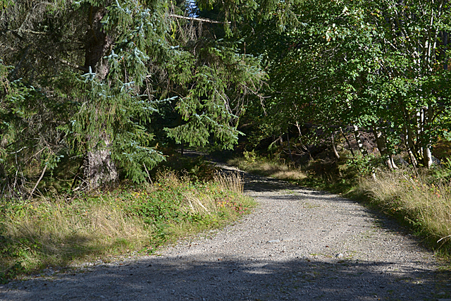 Forestry track near Braemore Square