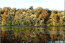 NS2209 : Autumn at the Swan Pond by Billy McCrorie