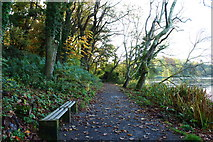 NS2209 : Path by the Swan Pond, Culzean by Billy McCrorie