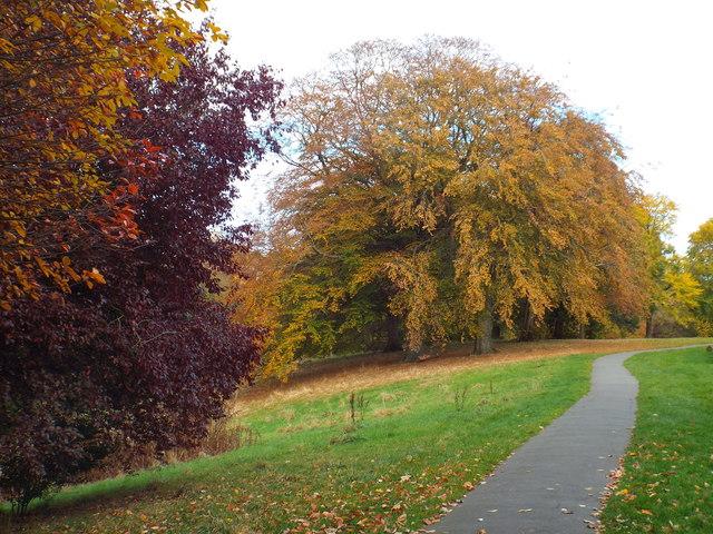 Autumn colours in Backhouse Park, Sunderland