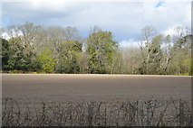 SX4255 : Field by the A374 by N Chadwick