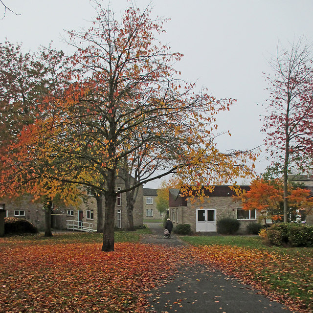 Grey morning, bright leaves