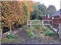 SJ8353 : Kidsgrove: footpath off Beech Drive by Jonathan Hutchins