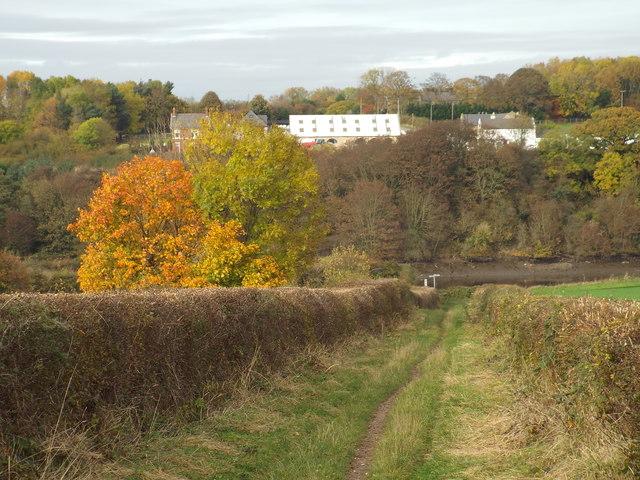 Autumn colours on Wearside