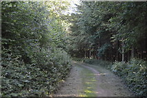 TQ3328 : High Weald Landscape Trail, River's Wood by N Chadwick