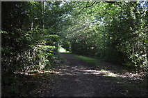 TQ3327 : High Weald Landscape Trail, River's Wood by N Chadwick