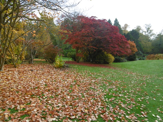 Autumnal colours in the gardens of Burrswood Hospital