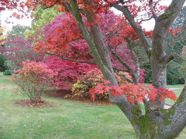Autumn in the grounds of Burrswood Hospital