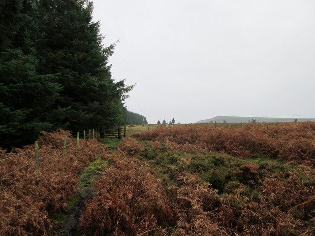 Bridleway  gate  out  of  MOD  land  toward  Malo  Cross