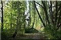 TQ4576 : Green Chain Walk crossing East Wickham Open Space by Chris Heaton