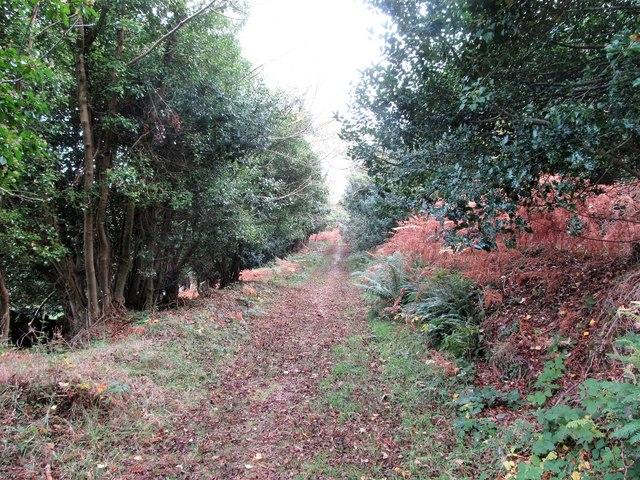 Forest path descending towards Seacliff Close