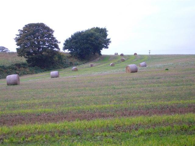 Bales of Hay on Iverley Hay Farm