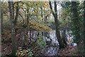 SJ6593 : Pond in woodland by Bill Boaden
