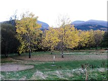 J3731 : Autumn colour on the Footgolf course at Islands Park by Eric Jones