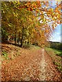 SO8101 : Autumn colour in Break-heart-hill Wood by Philip Halling