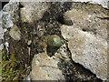 SH7938 : OS bolt - Cefn Llyn by Richard Law