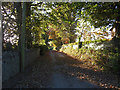S5249 : Rural Laneway by kevin higgins