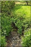 SS2202 : Stream near Marhamchurch by Derek Harper