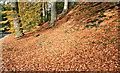 J3268 : Autumn leaves, Minnowburn, Belfast (November 2016) by Albert Bridge