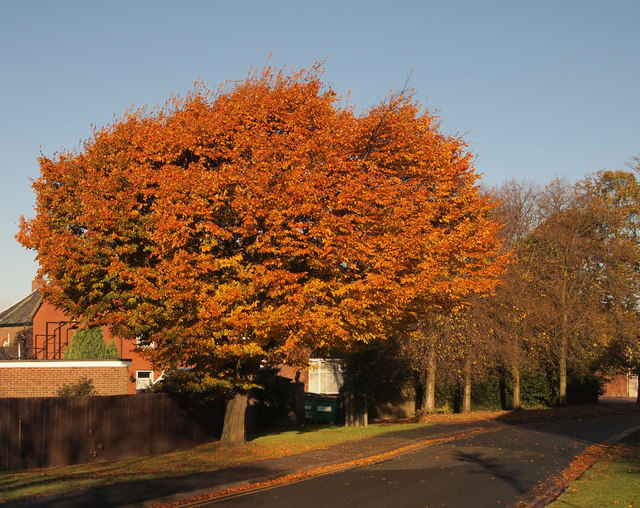 Autumnal Tree in Merryman Garth