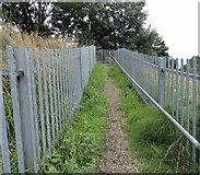 TQ5487 : Footpath 172 heading towards Maywin Drive by Phil Gaskin