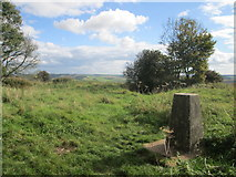SU6022 : Trig point on Beacon Hill by Peter S