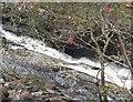 NN8869 : The Allt Slanaidh, Glen Tilt by Jim Barton