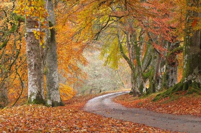 Autumn woods in Glen Tilt