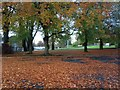 H4672 : Fallen leaves, Omagh by Kenneth  Allen
