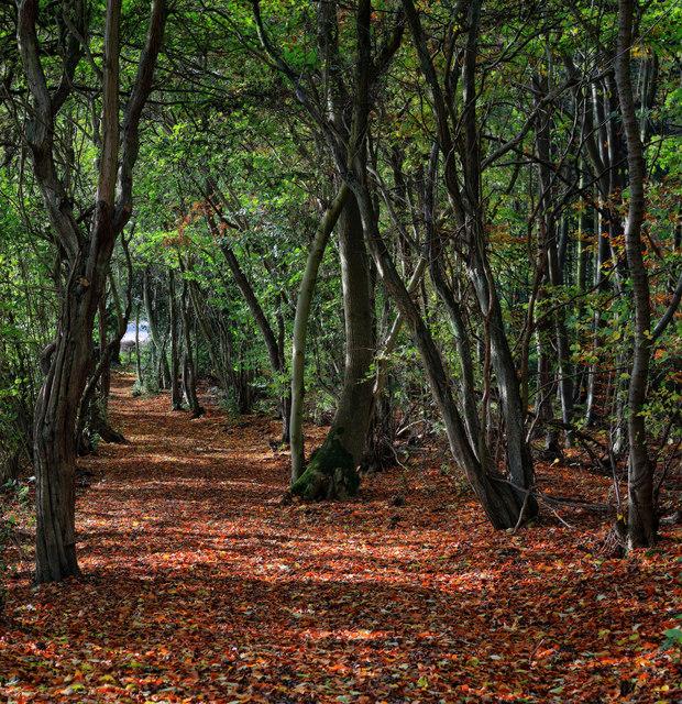 Bridleway: Scarcliffe Park