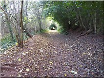 SX9491 : Footpath through a tunnel of trees on Pynes Hill, Exeter by David Smith