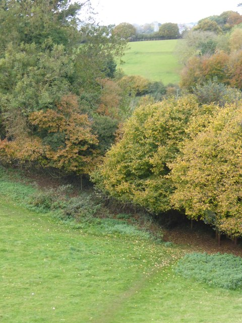 Autumn colour and waymarked path, Pynes Hill, Exeter