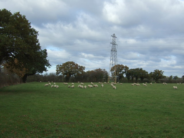 Sheep grazing and pylon