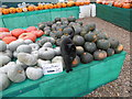 SU9608 : Cat in charge of the 2016 Slindon Pumpkin Festival by Marathon