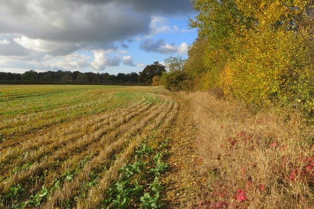 Autumn hedge looking towards Akeley Woods Farm