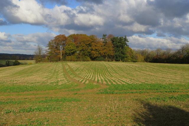 Small wood near Akeley Wood Farm