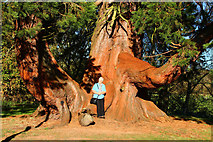 NS5420 : Old Tree, Dumfries House Estate by Billy McCrorie