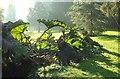 SX9064 : Gunnera, Sherwell Park by Derek Harper