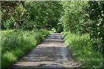 TQ5344 : Track through the woods by N Chadwick
